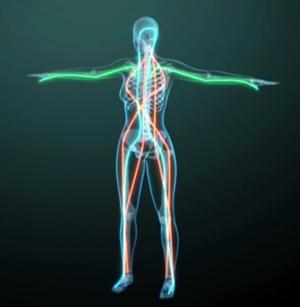 la circulation énergétique dans le corps