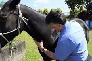 Les soins pour chevaux en technique EMMETT